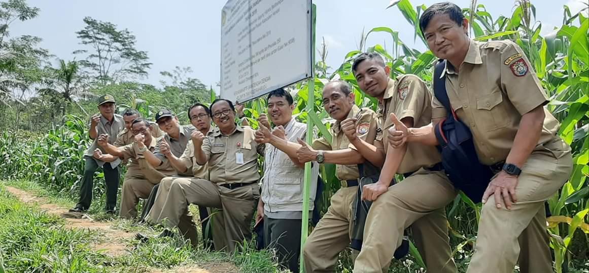 Tim dari Dinas Pertanian dan Pangan Kabupaten Kendal bersama tim Balitbangtan BPTP Jawa Tengah, saat melakukan monitoring di lahan penangkaran benih jagung hibrida BIMA URI-20 di lahan Poktan Ngudi Raharjo 1 Desa Wirosari.